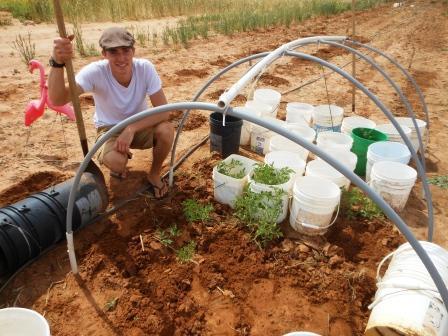 Transplanting Hoop House Plants