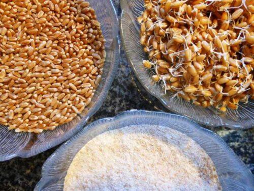 preparing grains