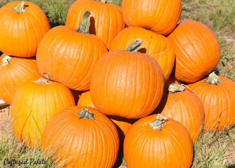 A bunch of pumpkins in a pile in a field.