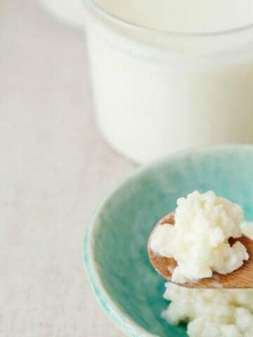 Kefir grains on a wooden spoon after kefir recipe is made.