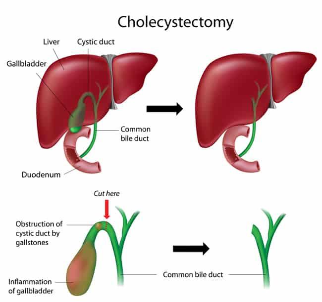 liver pancreas