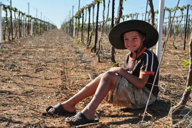 M vineyard