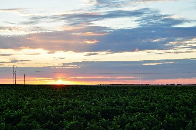 sunrise over west Texas vineyard July 2013