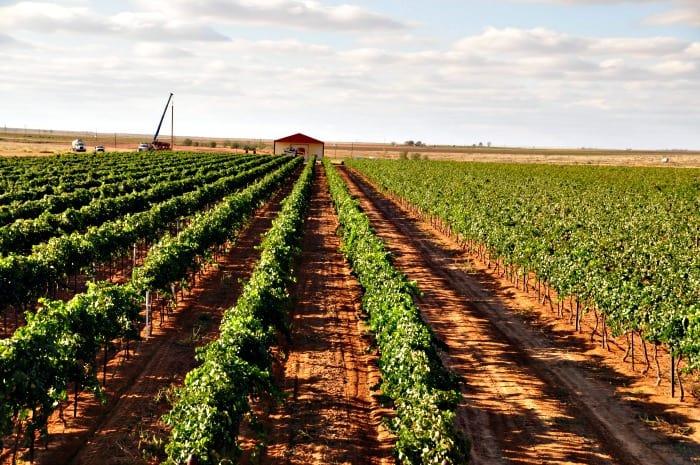vineyard Oct 16, 2013