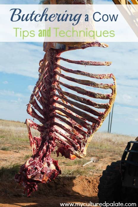 butchering a cow tips and techniques