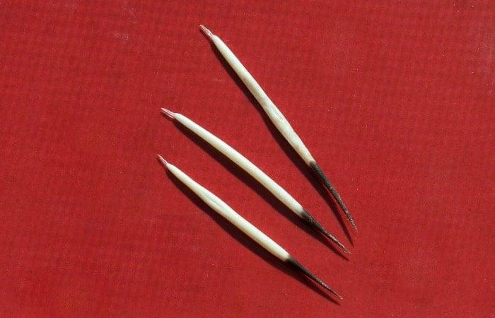 porciupine quills