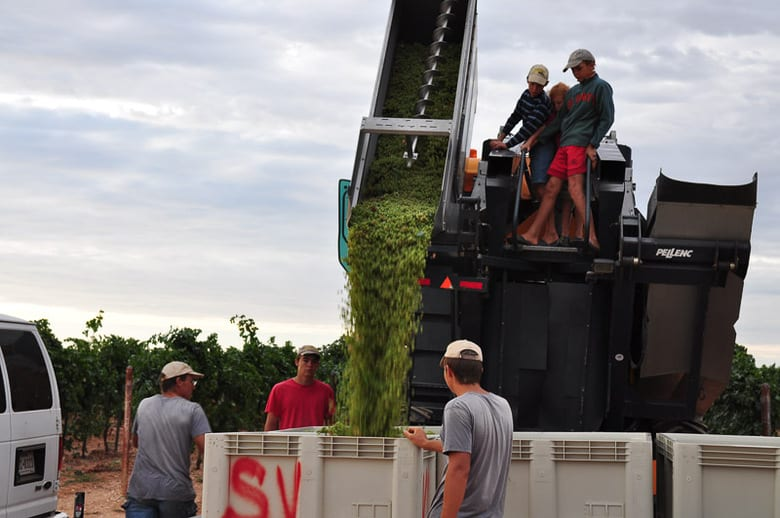 Roussanne grape harvest