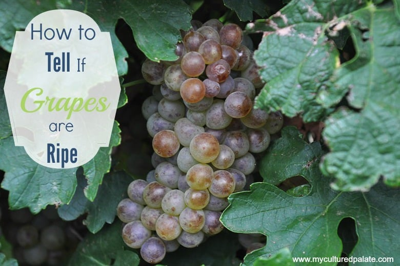 how to tell if grapes are ripe