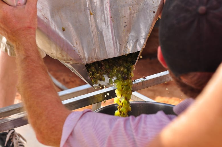 Roussanne grapes after going through the crusher destemmer