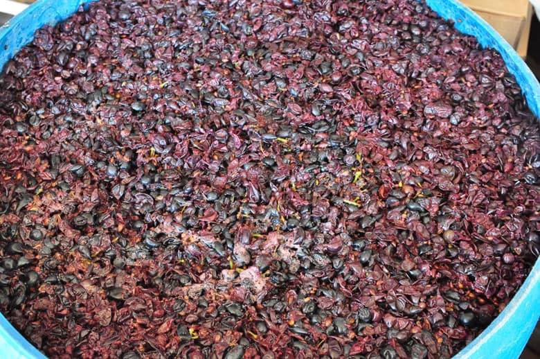 Montepulciano Grapes Fermenting