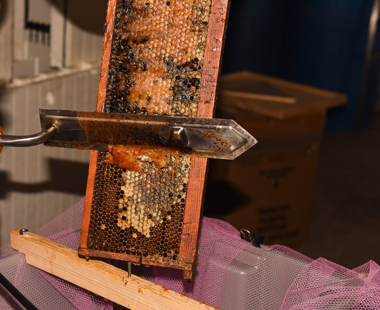 Extracting Honey with a Hot Knife