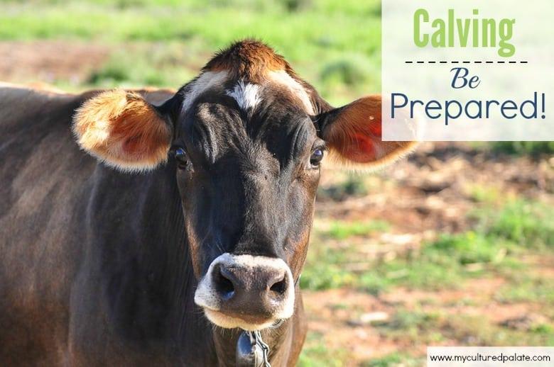 Calving- be prepared