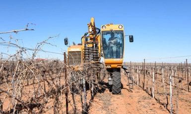 Prepruning the Vineyard
