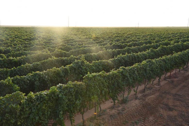 Vineyard 2015
