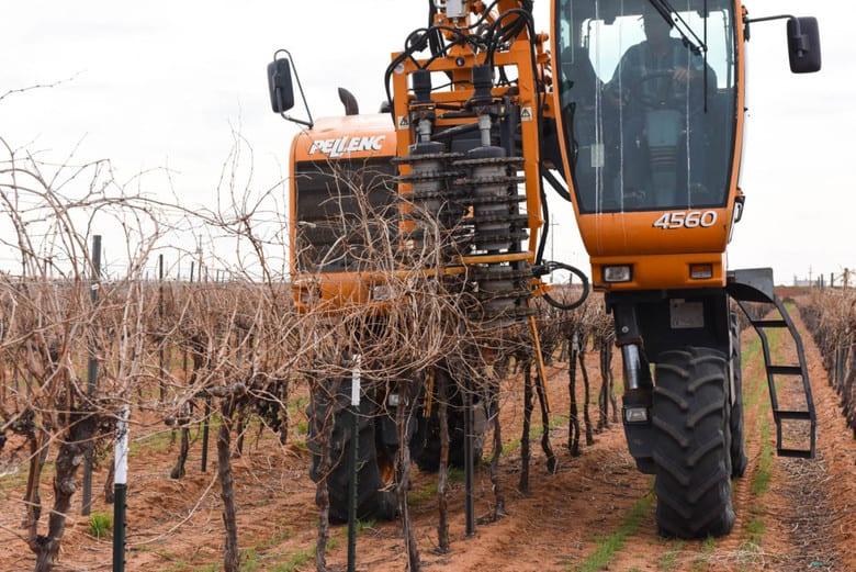 Prepruning the Vineyard - Pellenc 4560