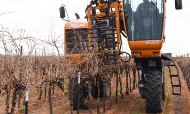 Pre-pruning the Vineyard 2016