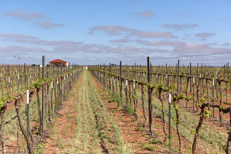 Spring Vineyard - Roussanne