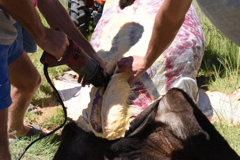 Home Butchering Homegrown Beef