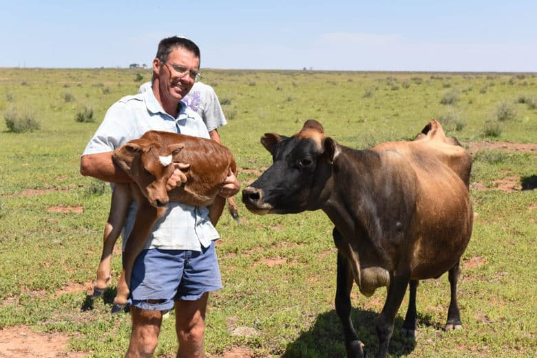 Carrying New Calf from Pasture