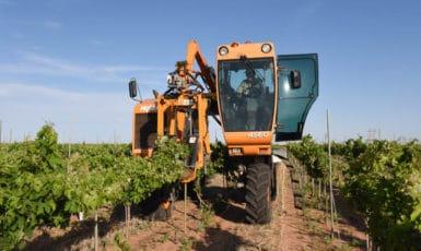 Wire Raising in the Vineyard