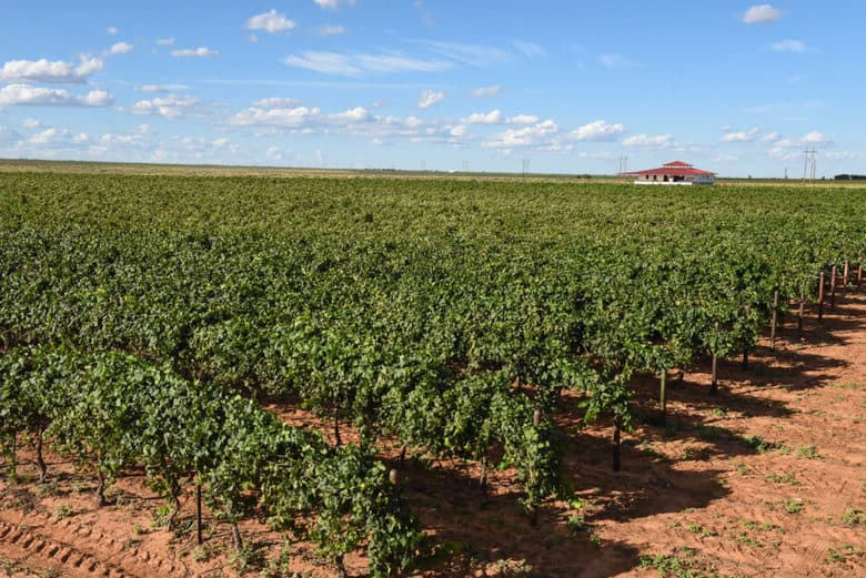 September Vineyard View