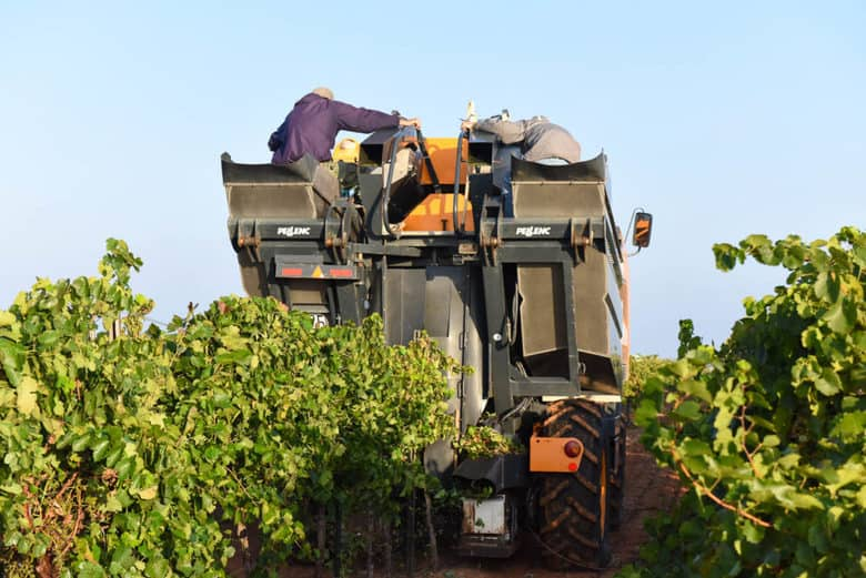 Grape Harvest 2016 - Aglianico and Montepulciano
