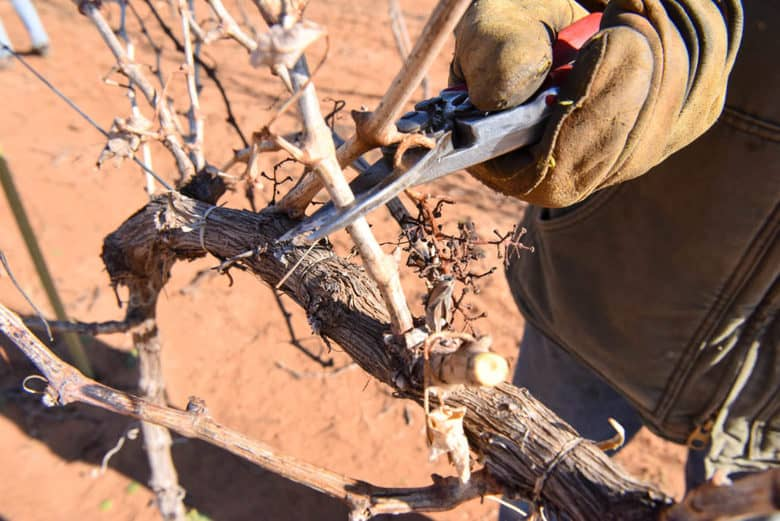 Hand Pruning the Vineyard 2017