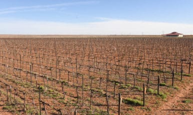 Almost Finished Pruning – 30 Acres Done, 2 to Go!