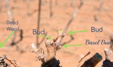 Hand Pruning the Vineyard 2017