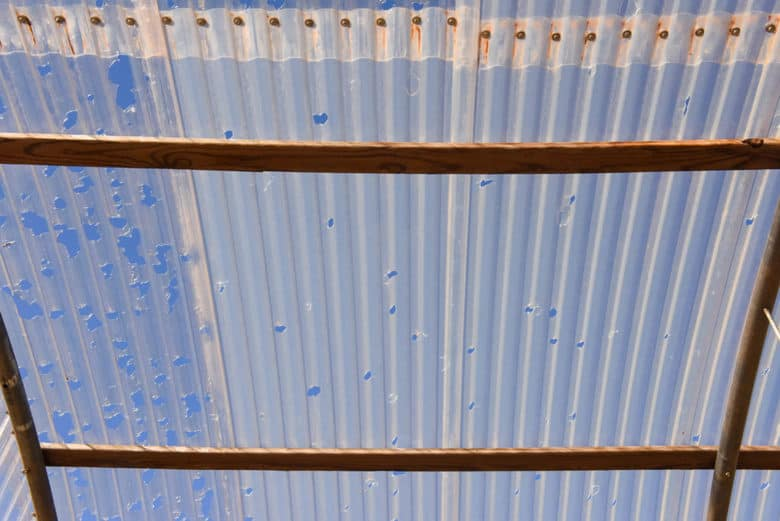 Hail Damage in the Vineyard - Greenhouse