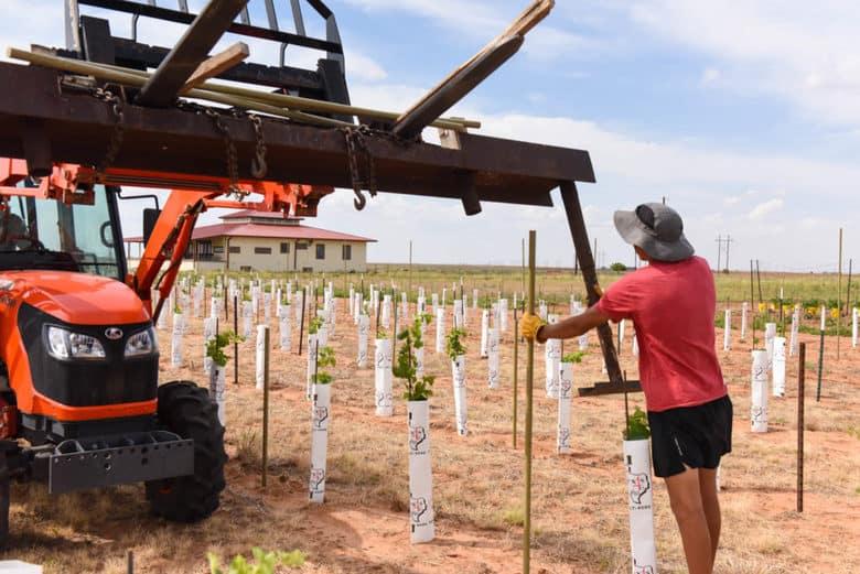 Trellising Grapevines - Albarino Vines