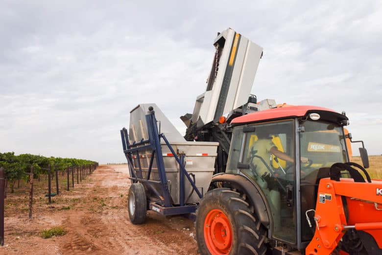 Montepulciano Grape Harvest - dumping the Pellenc harvester