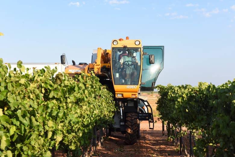 Aglianico Grape Harvest 2017 - Pellenc grape harvester