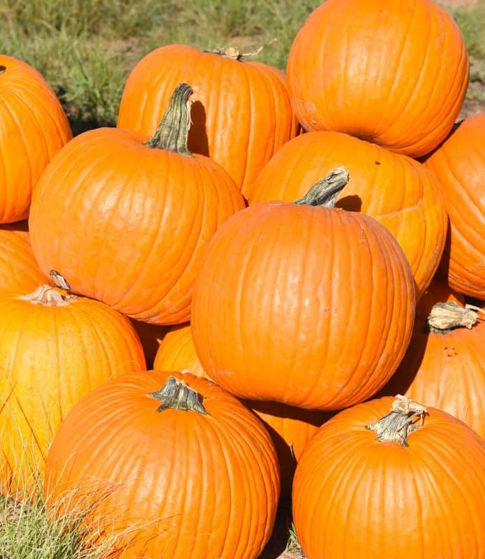 pumpkins stacked for How to Cook Pumpkin article