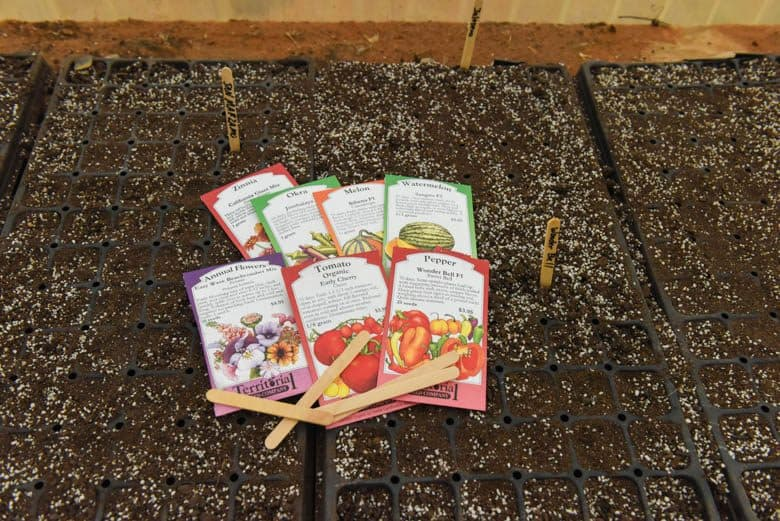 Starting Seeds Indoors - packets of seeds shown with potting soil on trays
