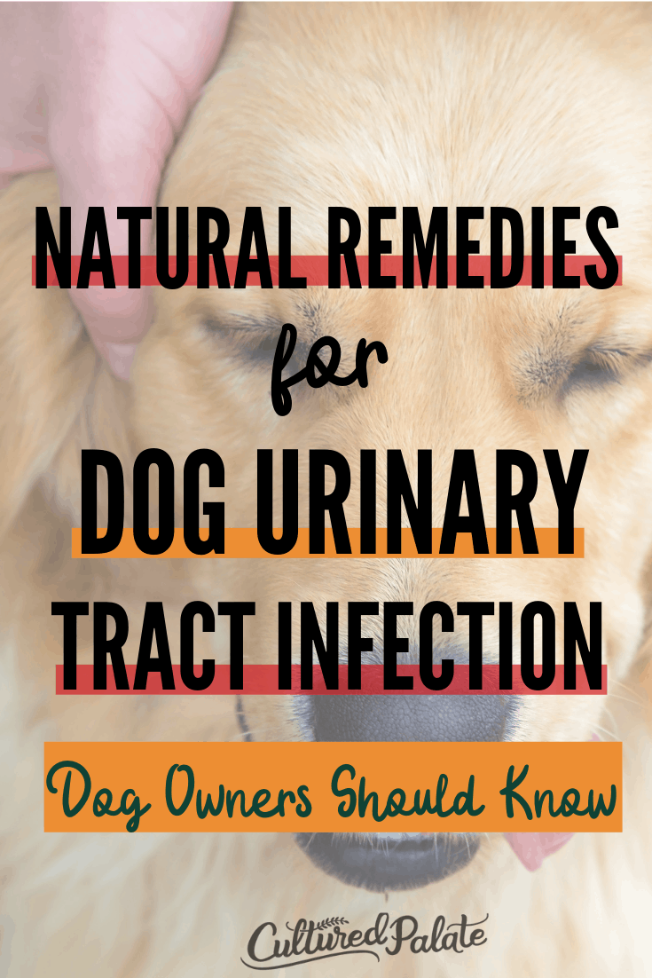Golden retriever shown with text overlay: Natural Remedies for Dog UTI